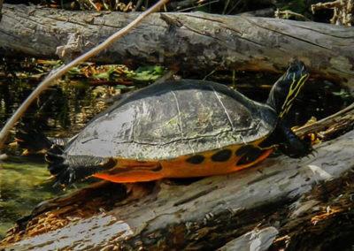 800-turtle