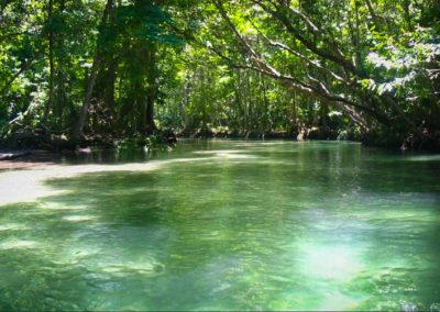 weeki-wachee-river-canopy