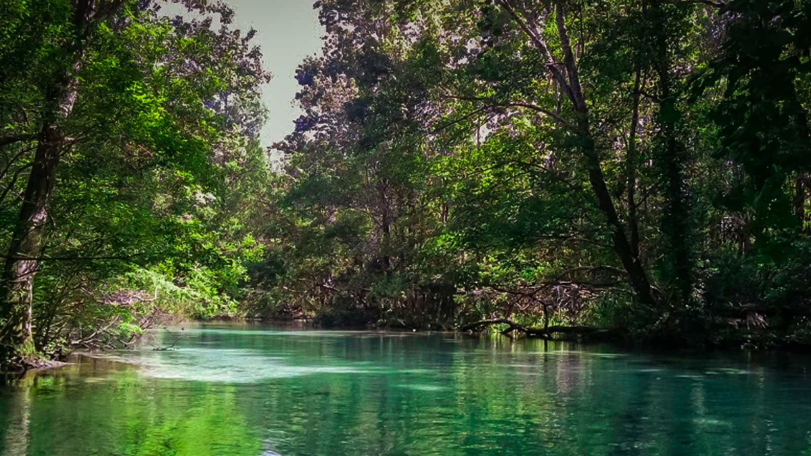 Weeki Wachee River - Spring Hill, Florida