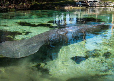 Rules of the River - Manatees Are Endangered